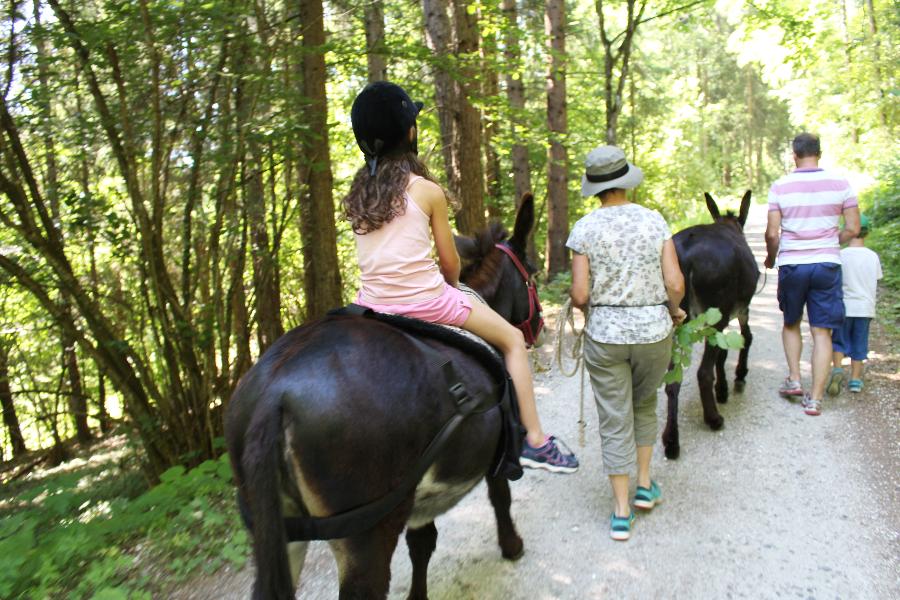 Wandern mit Tieren