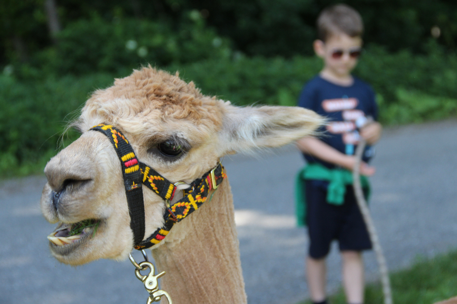 Familientipp – Lama Wanderung! Mein Glücksmoment trotz Tierphobie