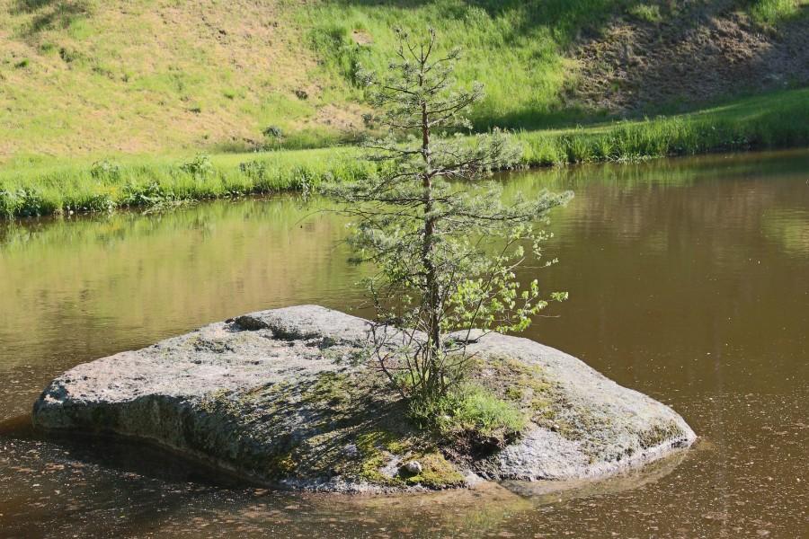 Romantische Burgen, Seen, Moor, Fischotter – mein Waldviertel <3