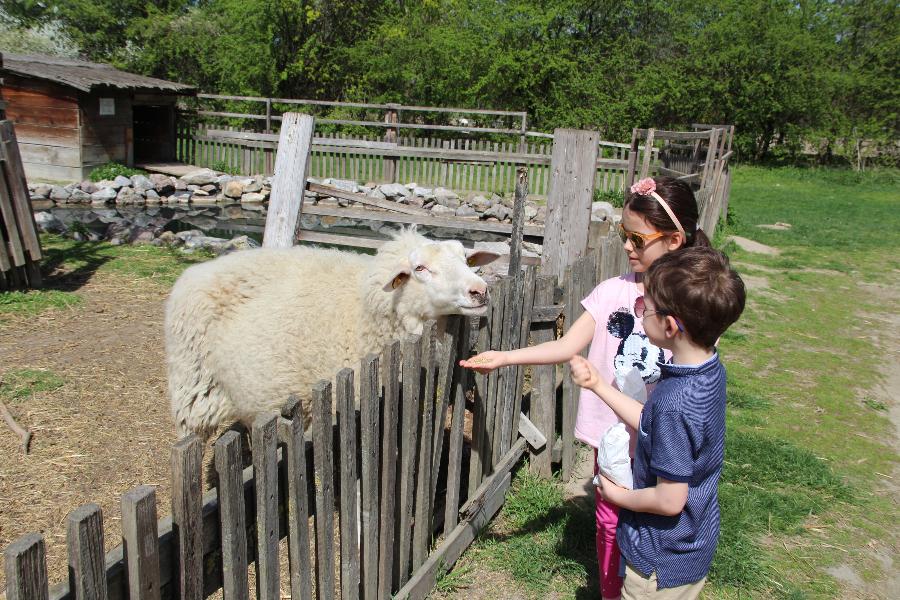 Wientipp für Familien! Farmtiere und ein Tipi Zelt – Die Vienna Kids Farm